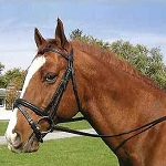 Legacy Padded Dressage Bridle with Flash and Reins