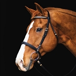 Dressage Bridle with Fancy Brass Browband and Details