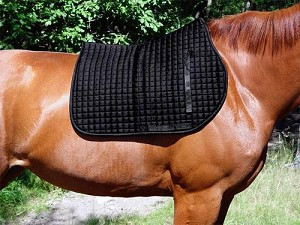 Back on Track English / AP Saddle Pad