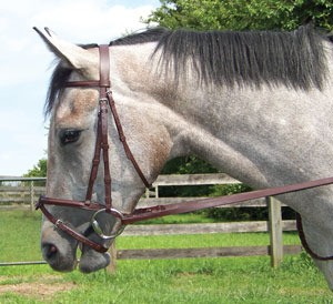 Shannon Raised padded Snaffle Bridle with Removable Flash