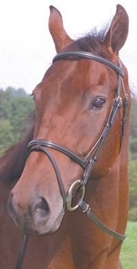 ProAm Raised Snaffle Bridle with Flash